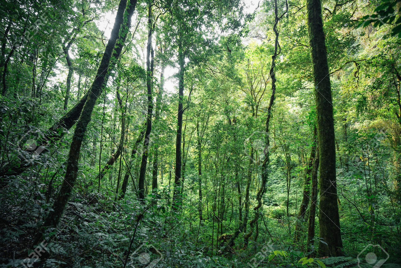 green trees inside tropical evergreen forest in of thailand stock
