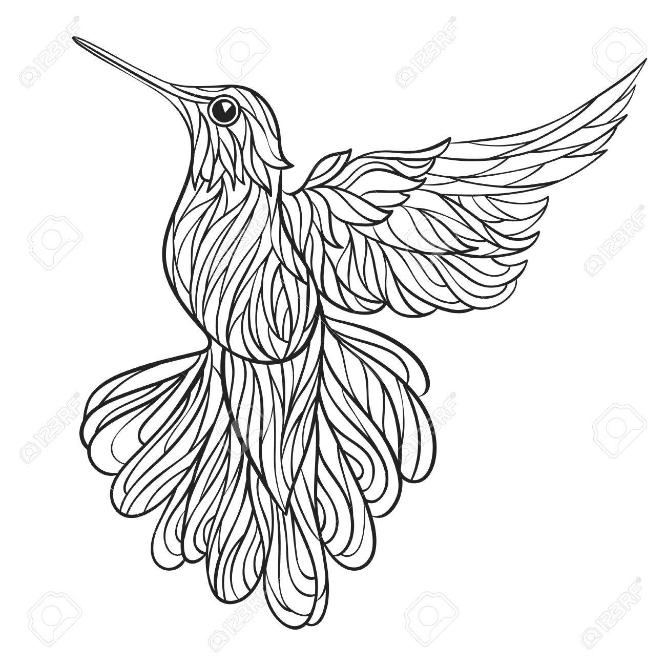 vector monochrome hand drawn illustration of colibri coloring