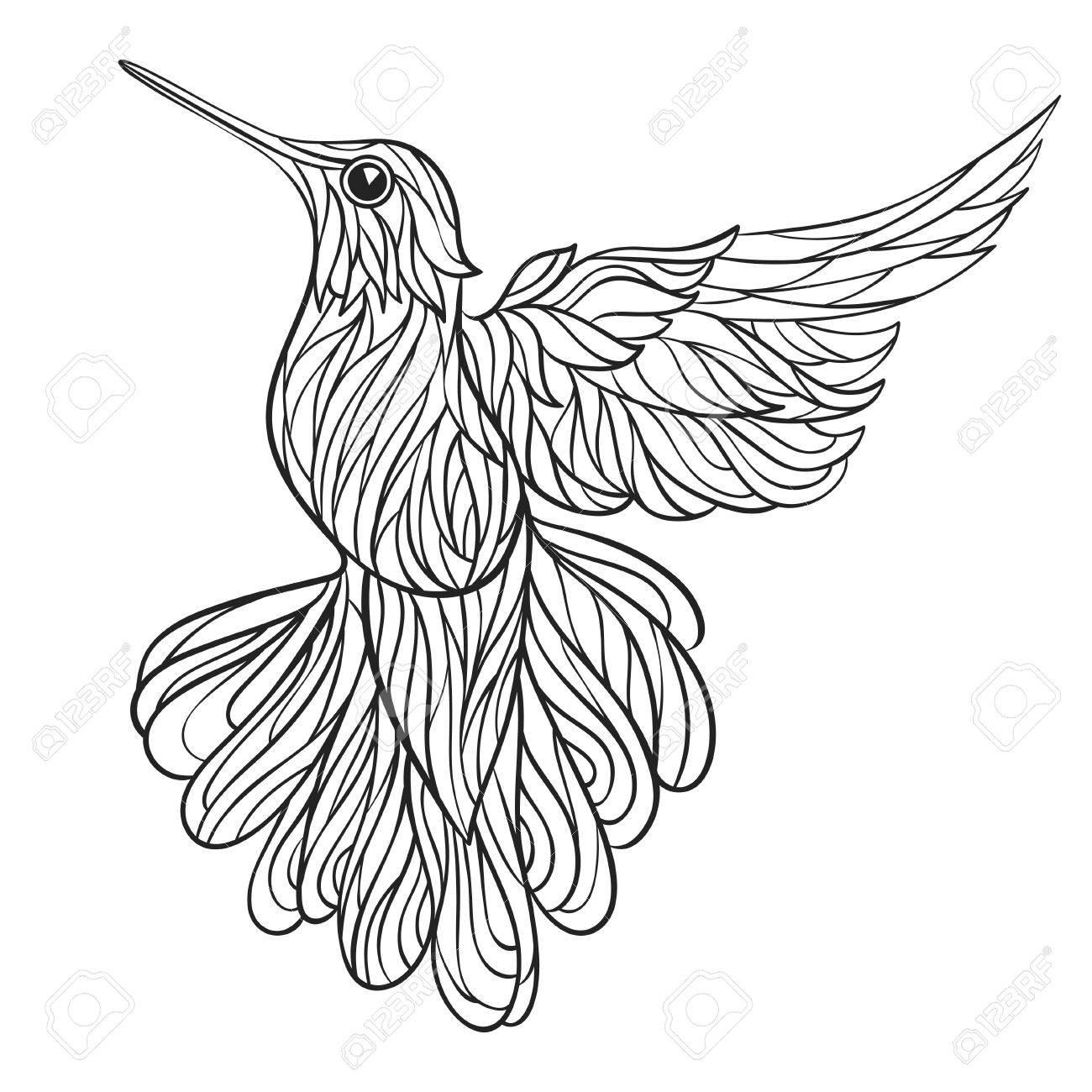 Vectorial Blanco Y Negro Dibujado A Mano Ilustración De Colibri