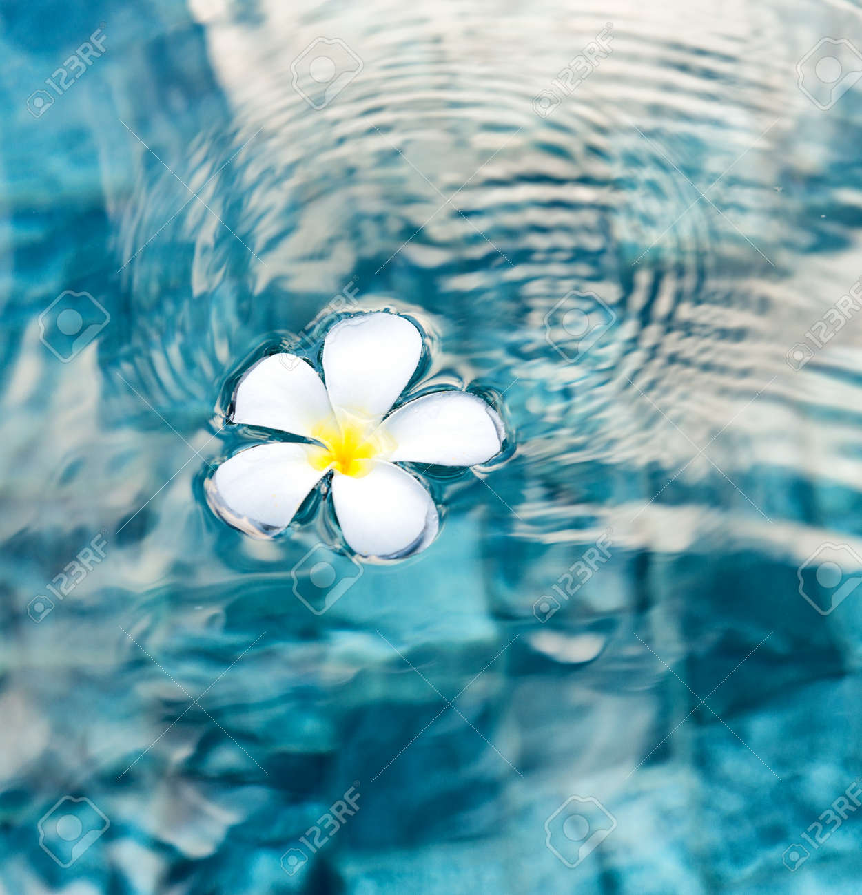 Single Peaceful Plumeria Flower Floating on Clear Rippling Water Stock Photo - 33441369