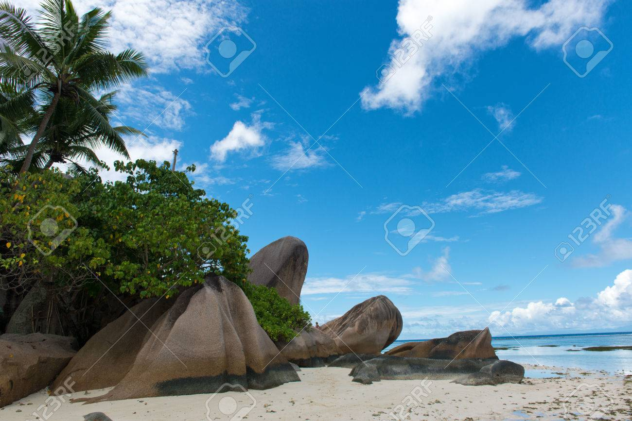 Image source plantsam com - Captivating Natural Beauty With Large Rocks And Green Plants And Trees On Beach Side Of Anse