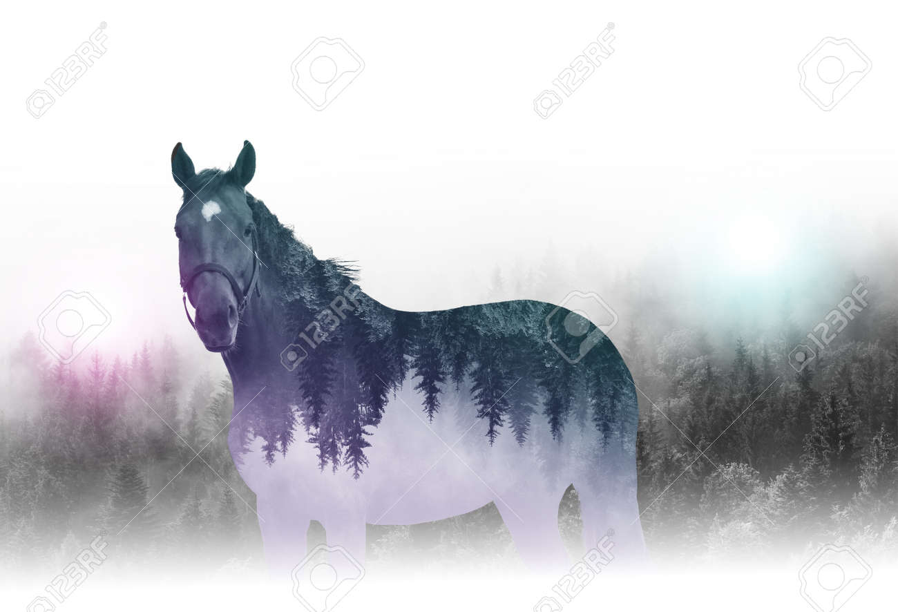 Creative reverse composition or double exposure image of outline of single horse with mirror image of trees - 60643642