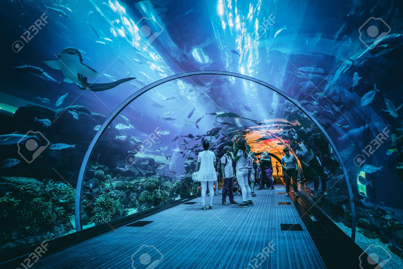 People viewing marine life in the underwater tunnel at the Dubai aquarium, a popular tourist attraction Standard-Bild - 65763972
