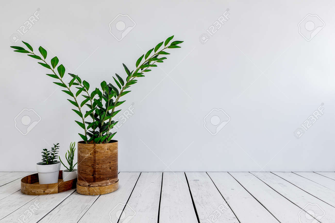 Three green potted plants on a white painted wooden floor against a white wall in a low angle view. 3d rendering - 130167327