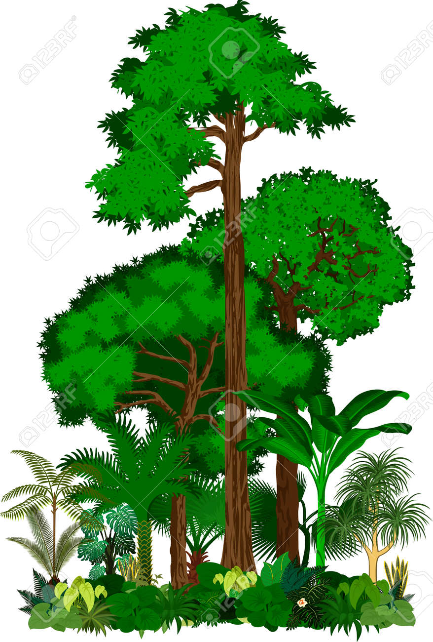 rainforest vector illustration vector green tropical forest rh 123rf com Tropical Rainforest Clip Art Black and White Rainforest Insects Clip Art