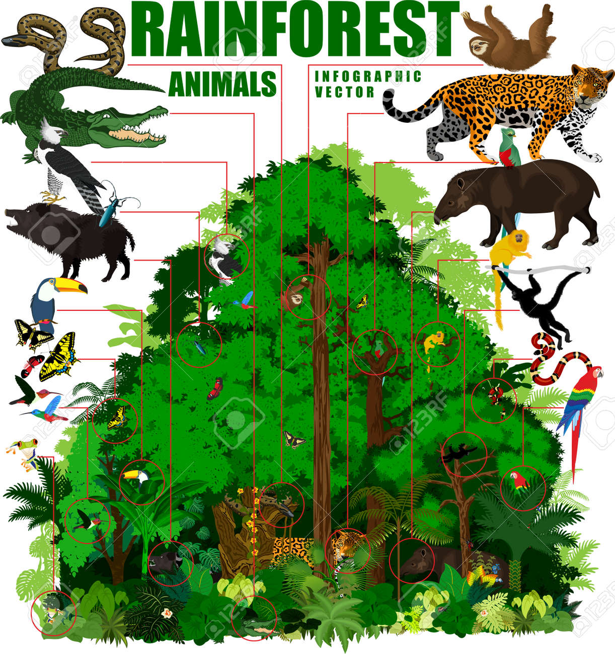 rainforest illustration tropical forest jungle infographic with rh 123rf com Rainforest Animals Clip Art tropical rainforest clipart