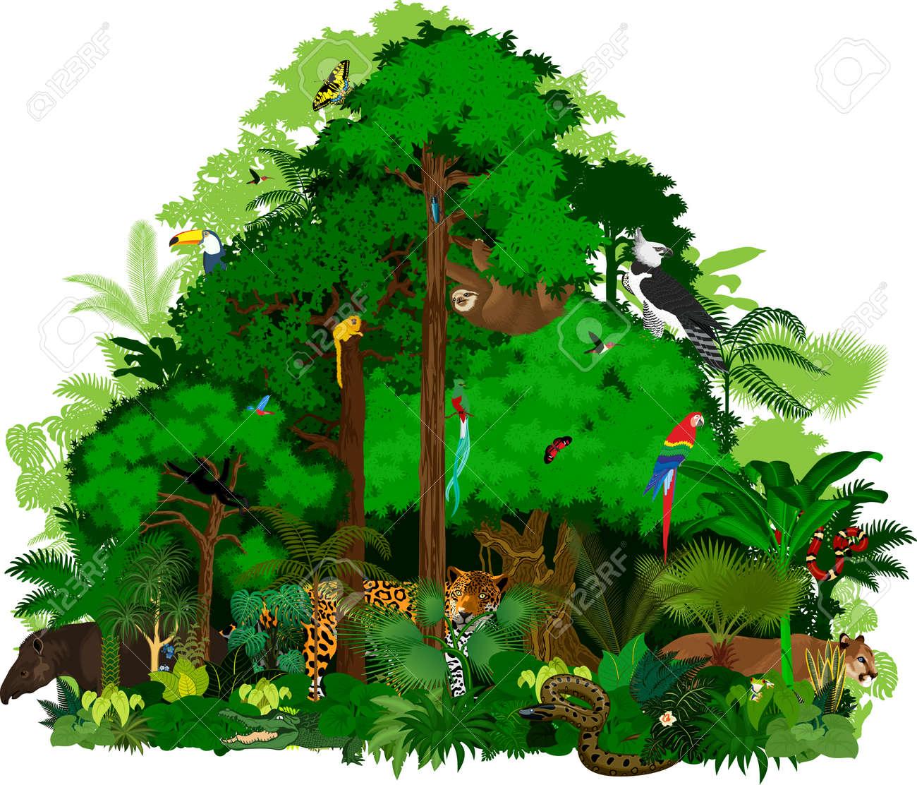 rainforest illustration green tropical forest jungle royalty free rh 123rf com  tropical rainforest animals clipart