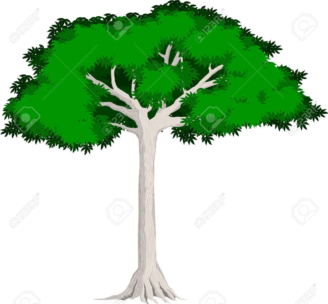 Tropical Jungle Rainforest Kapok Tree Royalty Free Cliparts Vectors