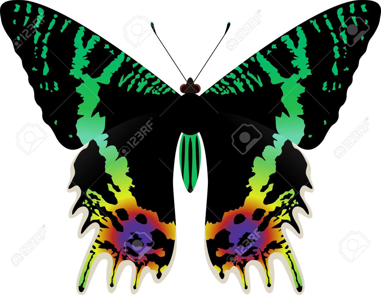 Vector Chrysiridia Rhipheus Butterfly Isolated On White Background  -> Borboleta Vetor