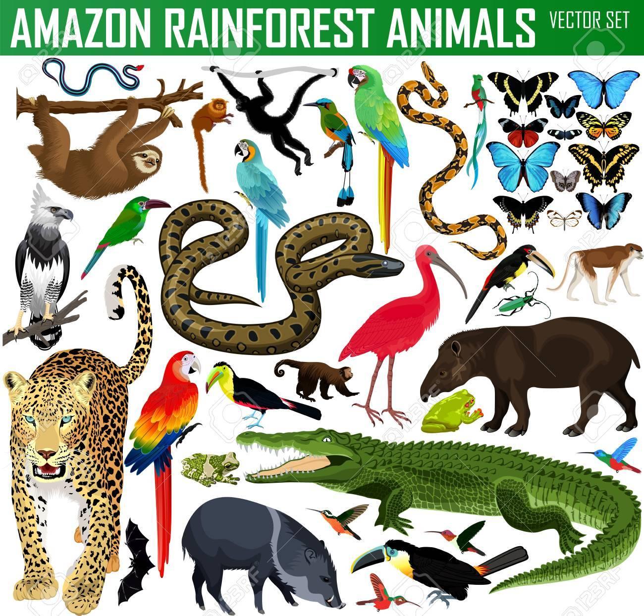 big set of vector amazon rainforest jungle animals - 89403895