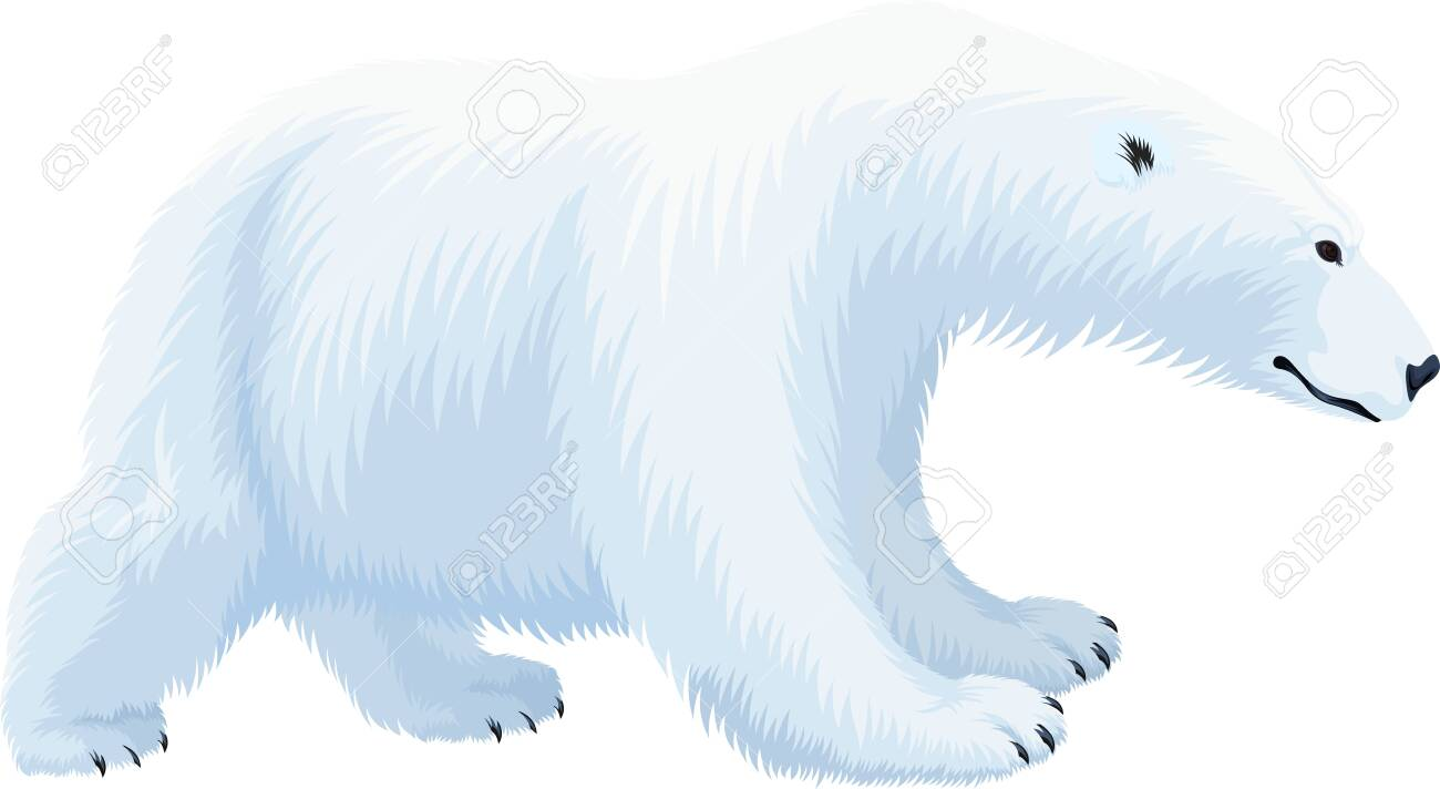 Polar Bear Roaring Animal Nature Snow Winter Arctic Circle Wild Predator Poster