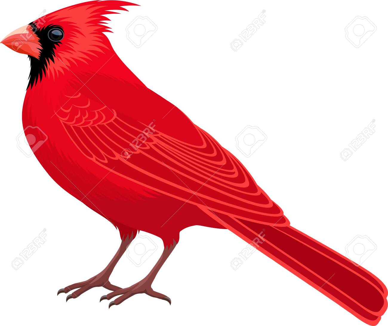 vector Red Male Northern Cardinal - state bird - 135917573