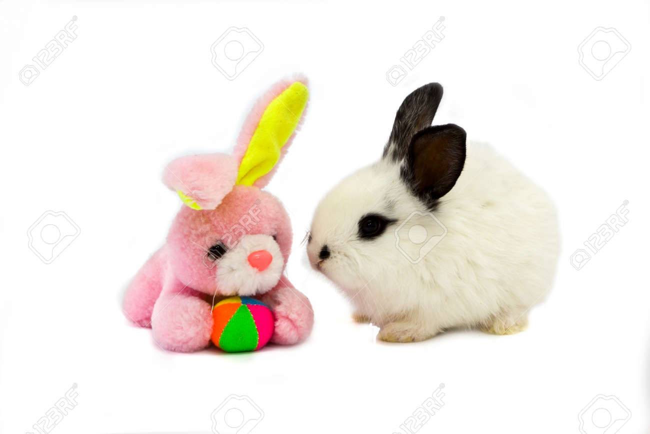 white bunny with a pink teddy rabbit stock photo picture and