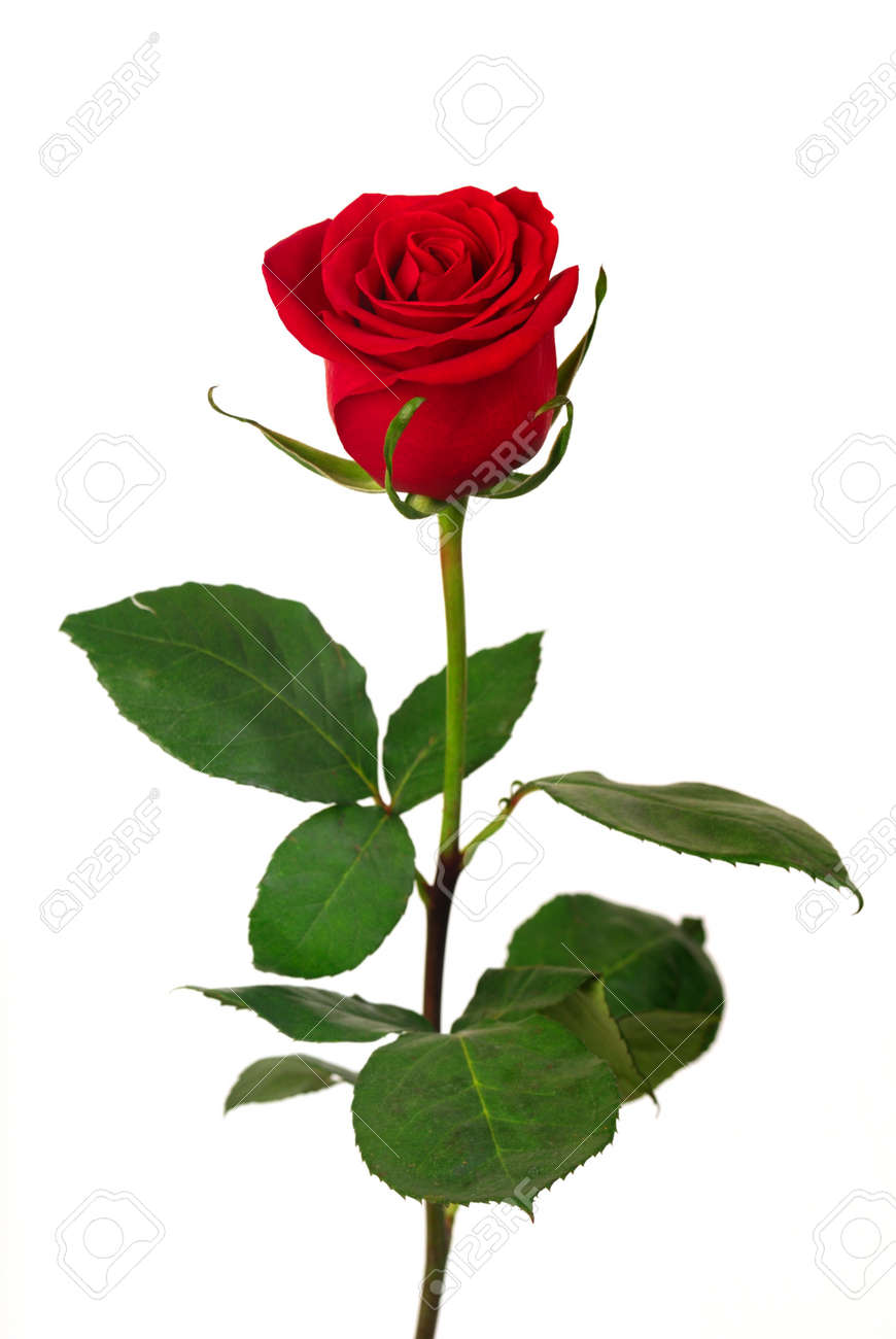 Red Roses - Perfect For Any Romantic Occasion