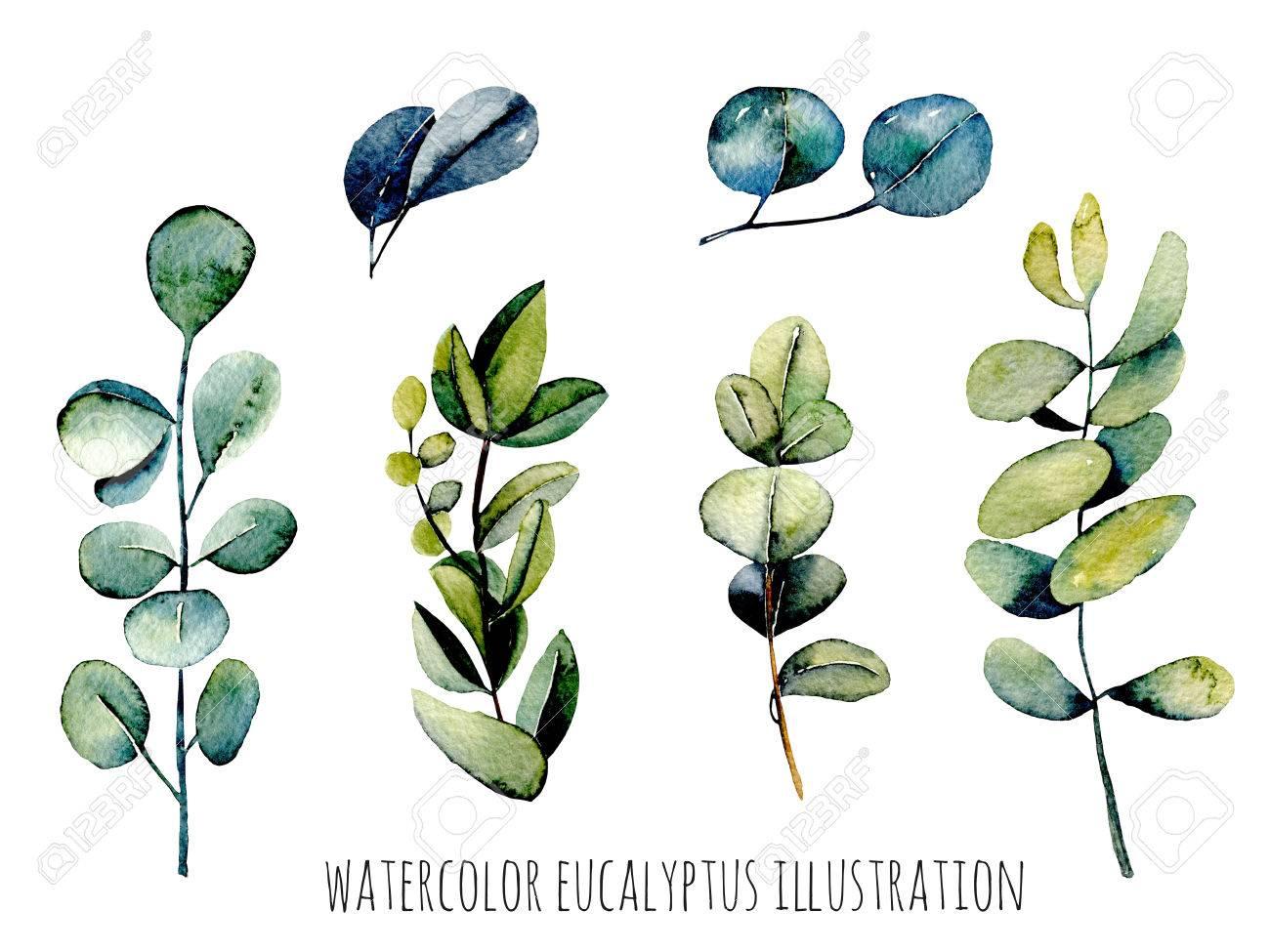 ensemble d'illustration aquarelle de branches d'eucalyptus, dessinés