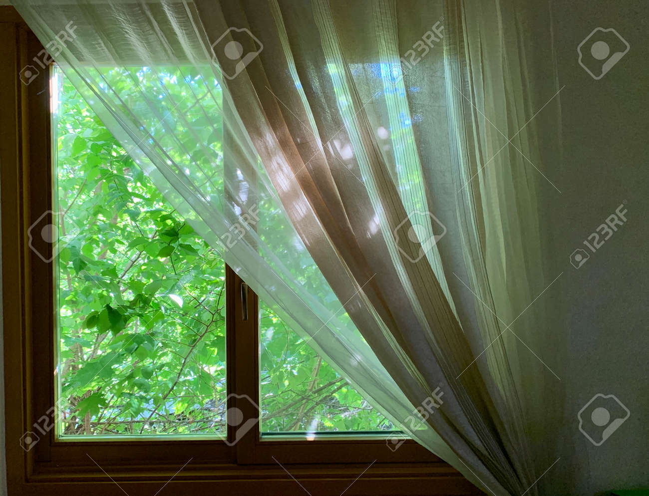 Sunny spring outside the window. Window in the house on a background of green plants. The sun's rays penetrate the house through the windows. - 147409481
