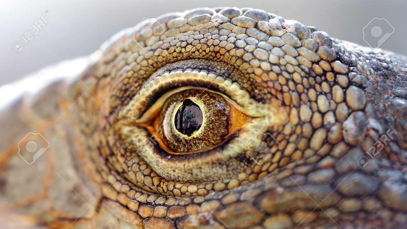 eye of a lizard close-up - 151223731