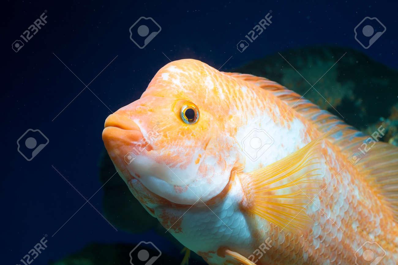 Fish in big aquarium - Big Aquarium Fish In Water Stock Photo 25281243