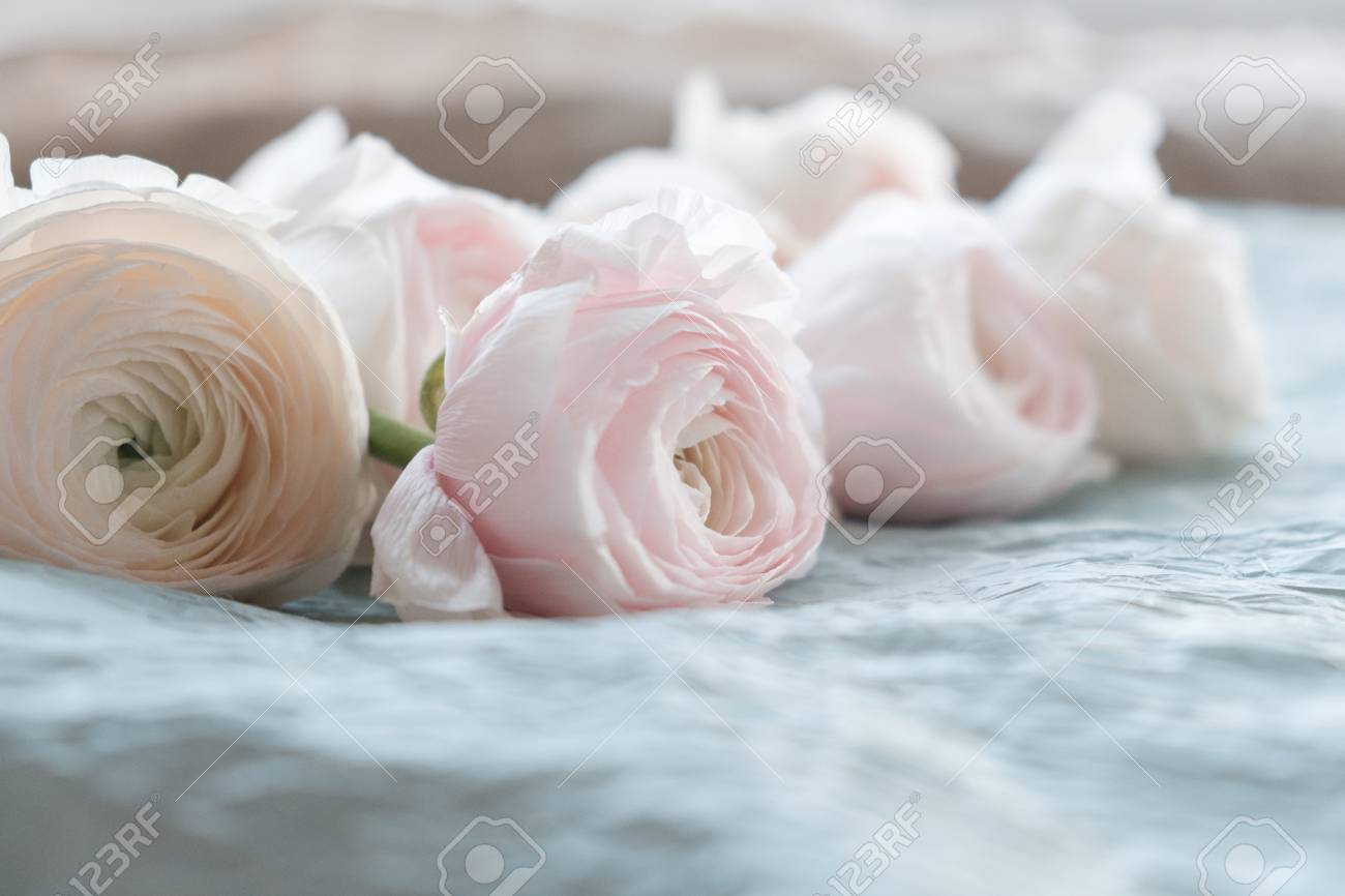Pale pink and white ranunculus bouquet on a blue background stock pale pink and white ranunculus bouquet on a blue background on blue crepe paper mightylinksfo