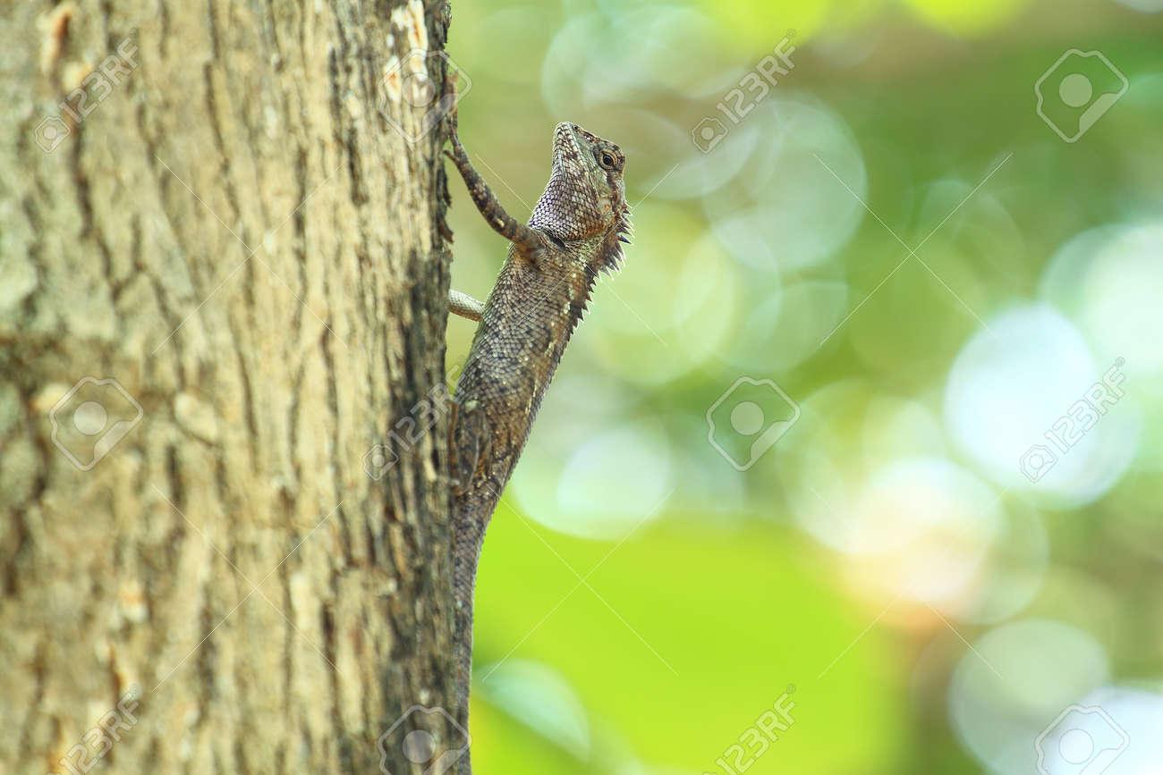chameleon Stock Photo - 13528912