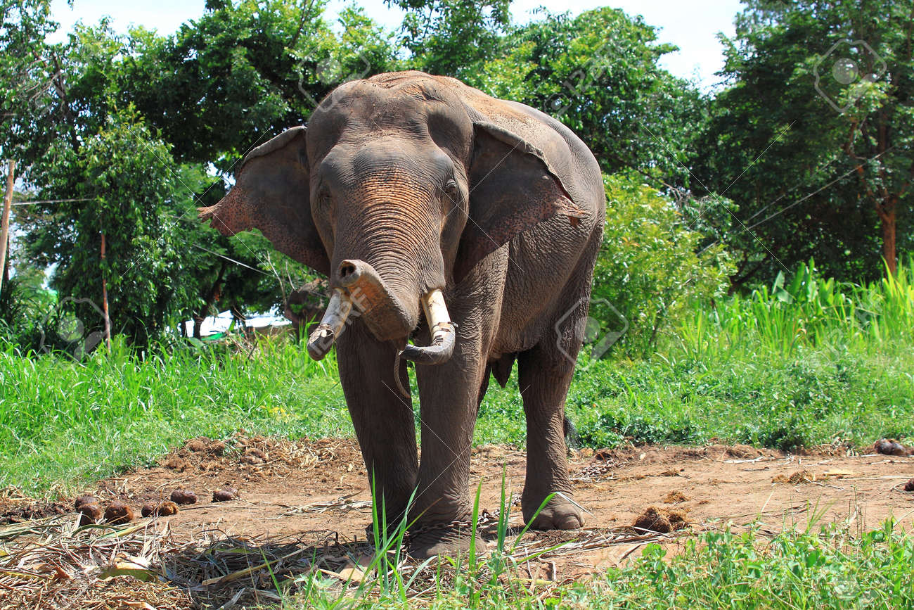Elephant asia Stock Photo - 16609245