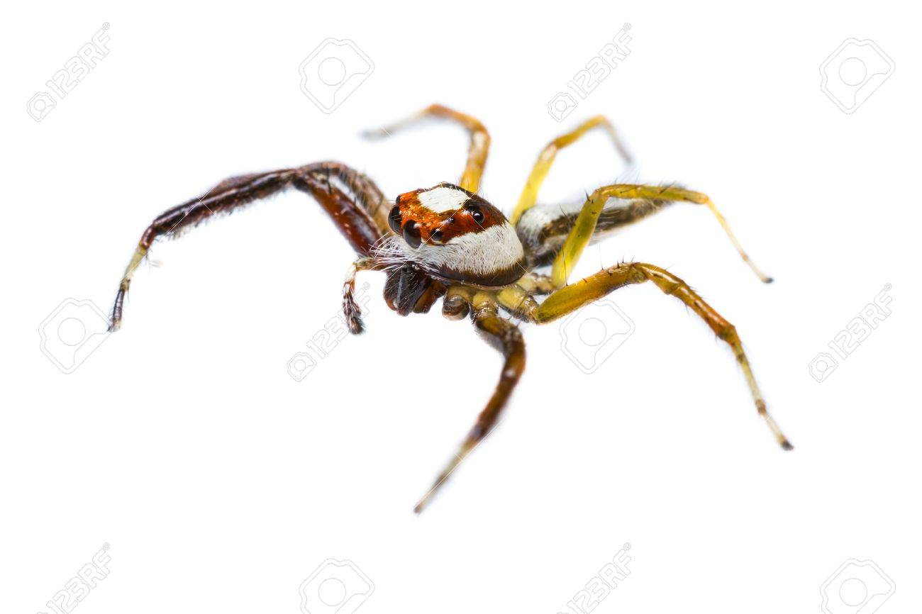 halloween jumping spider yellow garden spider stock photos u0026 pictures royalty free yellow