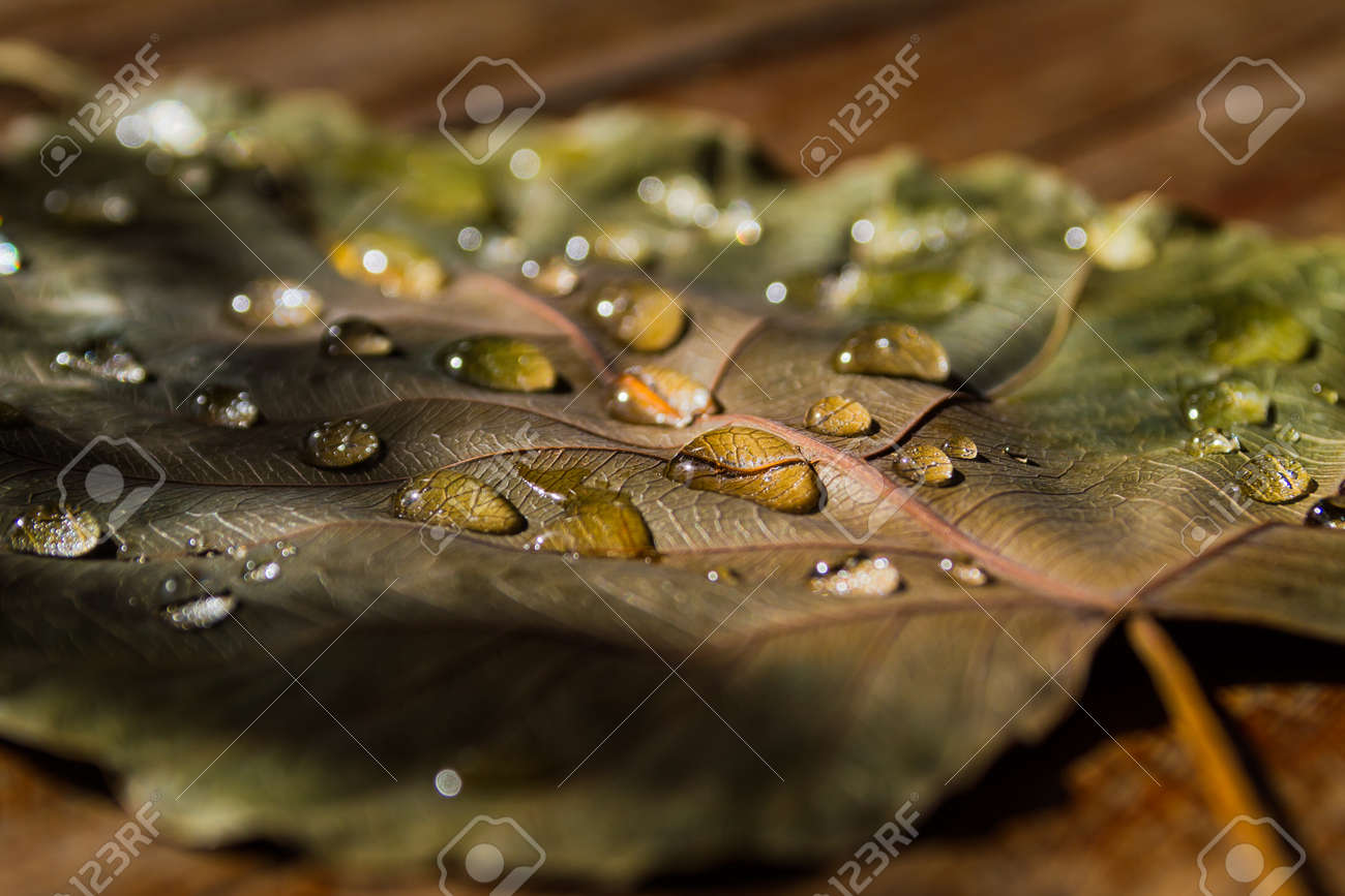 Close up of water drops on dry leaves Stock Photo - 19666100