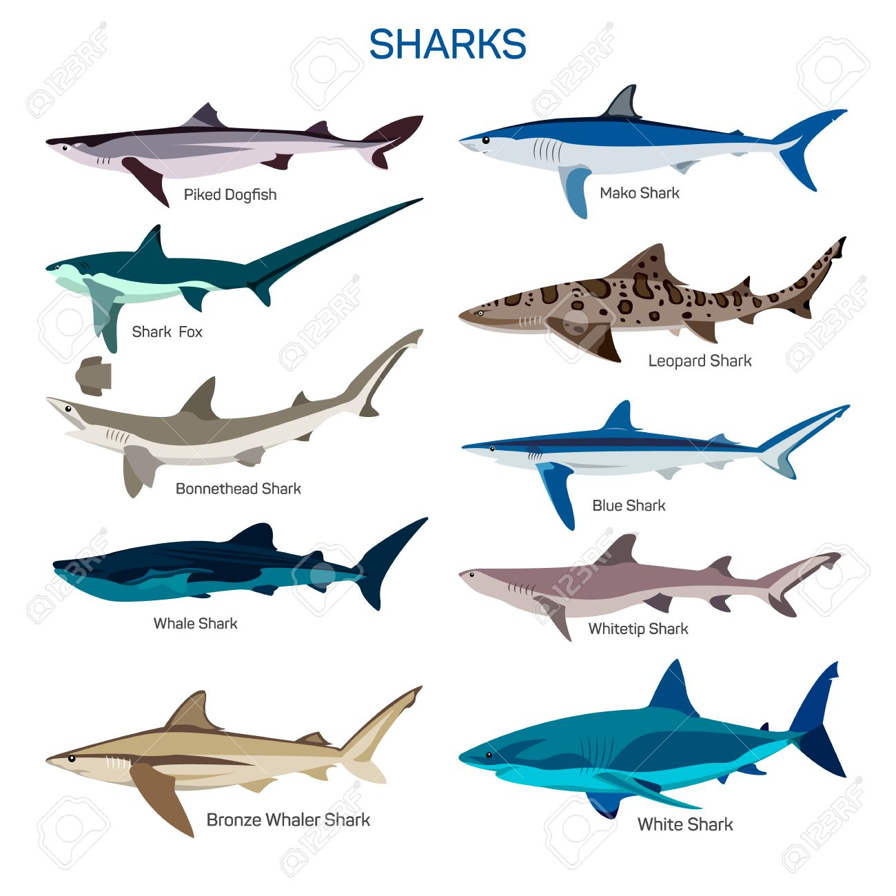 Shark fish vector set in flat style design different kind of shark fish vector set in flat style design different kind of sharks species icons collection altavistaventures Images
