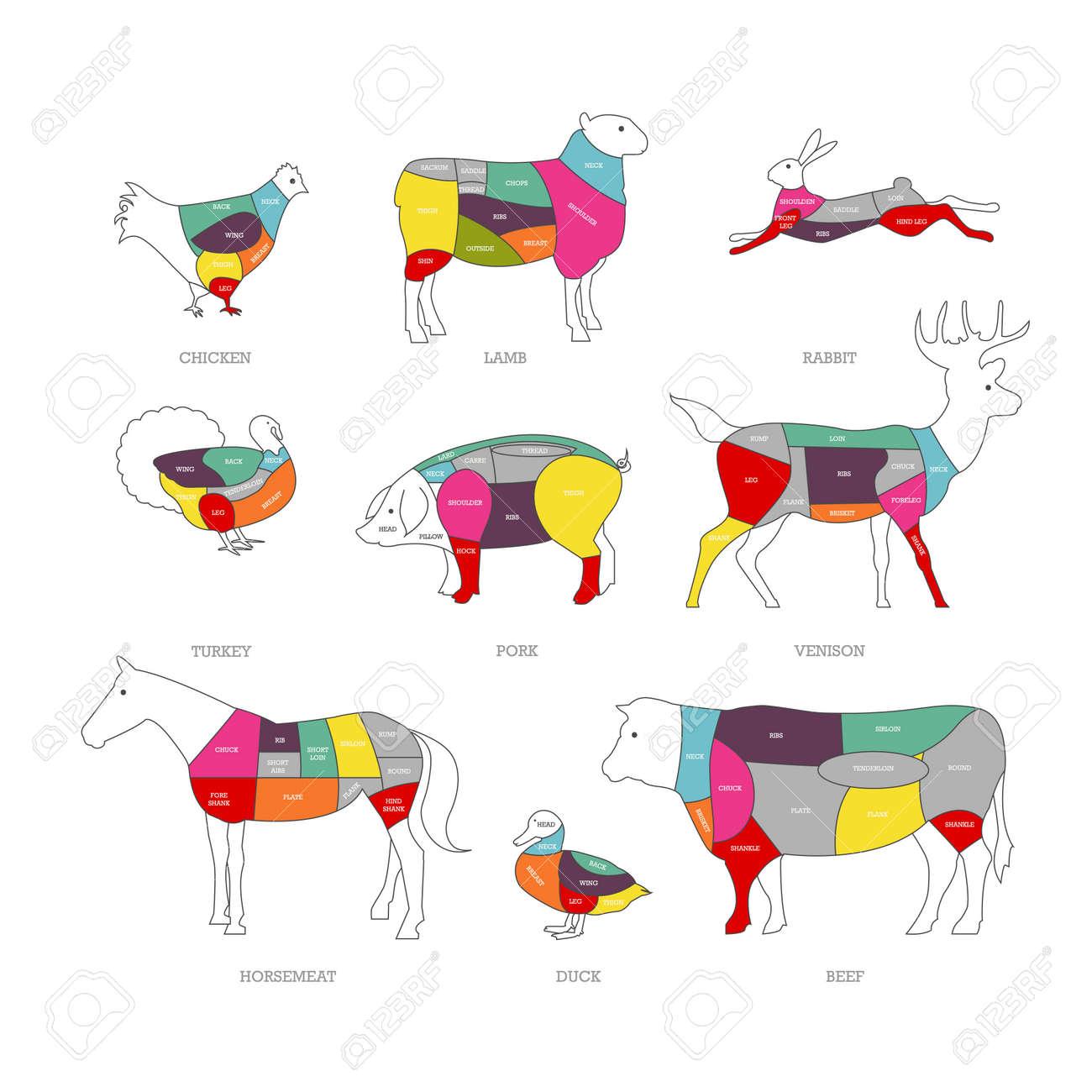 肉屋店概念ベクトル イラスト。肉をカットします。豚肉、牛肉、子羊の