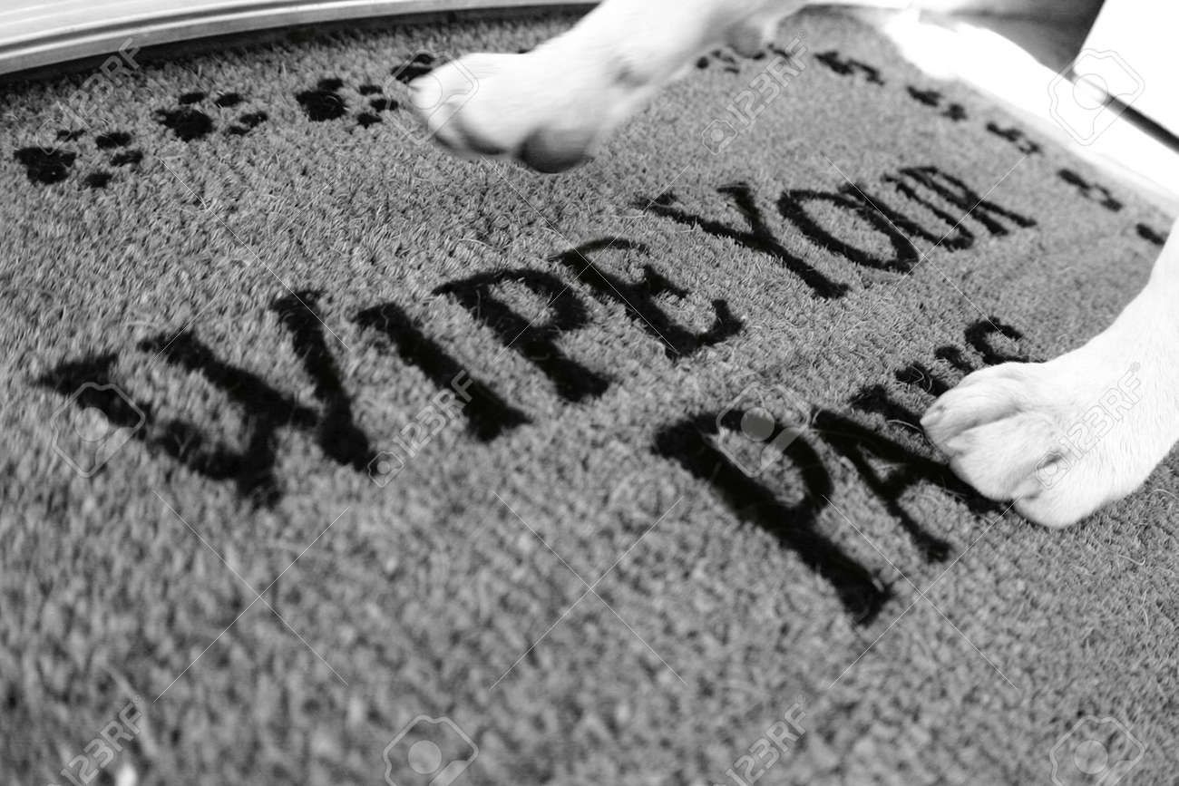 """dog walking on rug that says """"wipe your paws"""" - 3186219"""