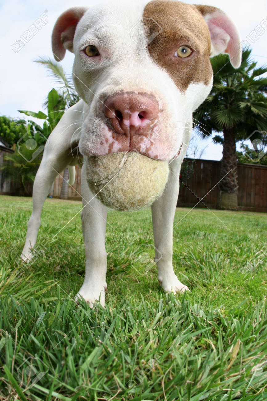 Dog holding ball in mouth - 3317931