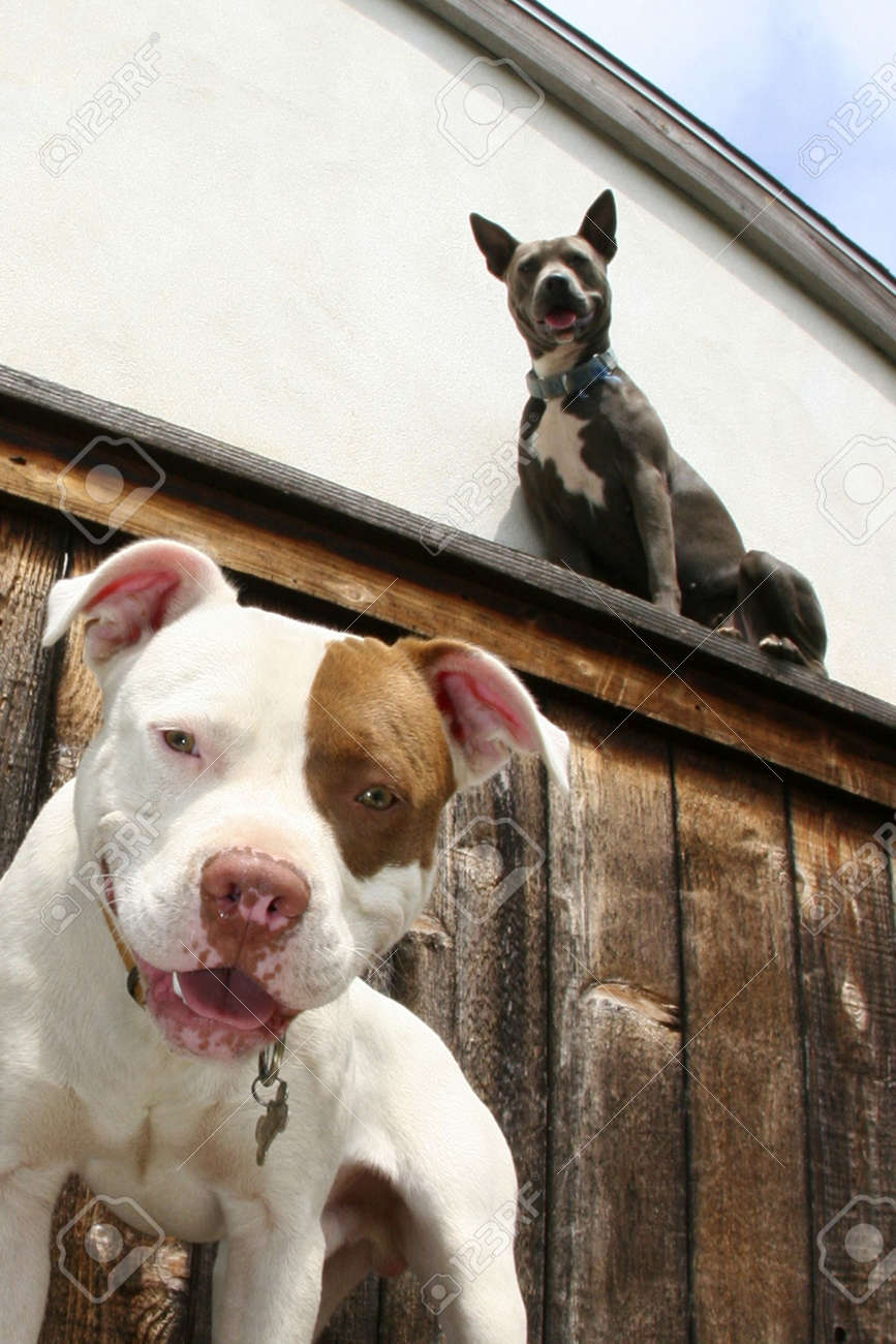 two dogs, one on fence, one below - 3317932