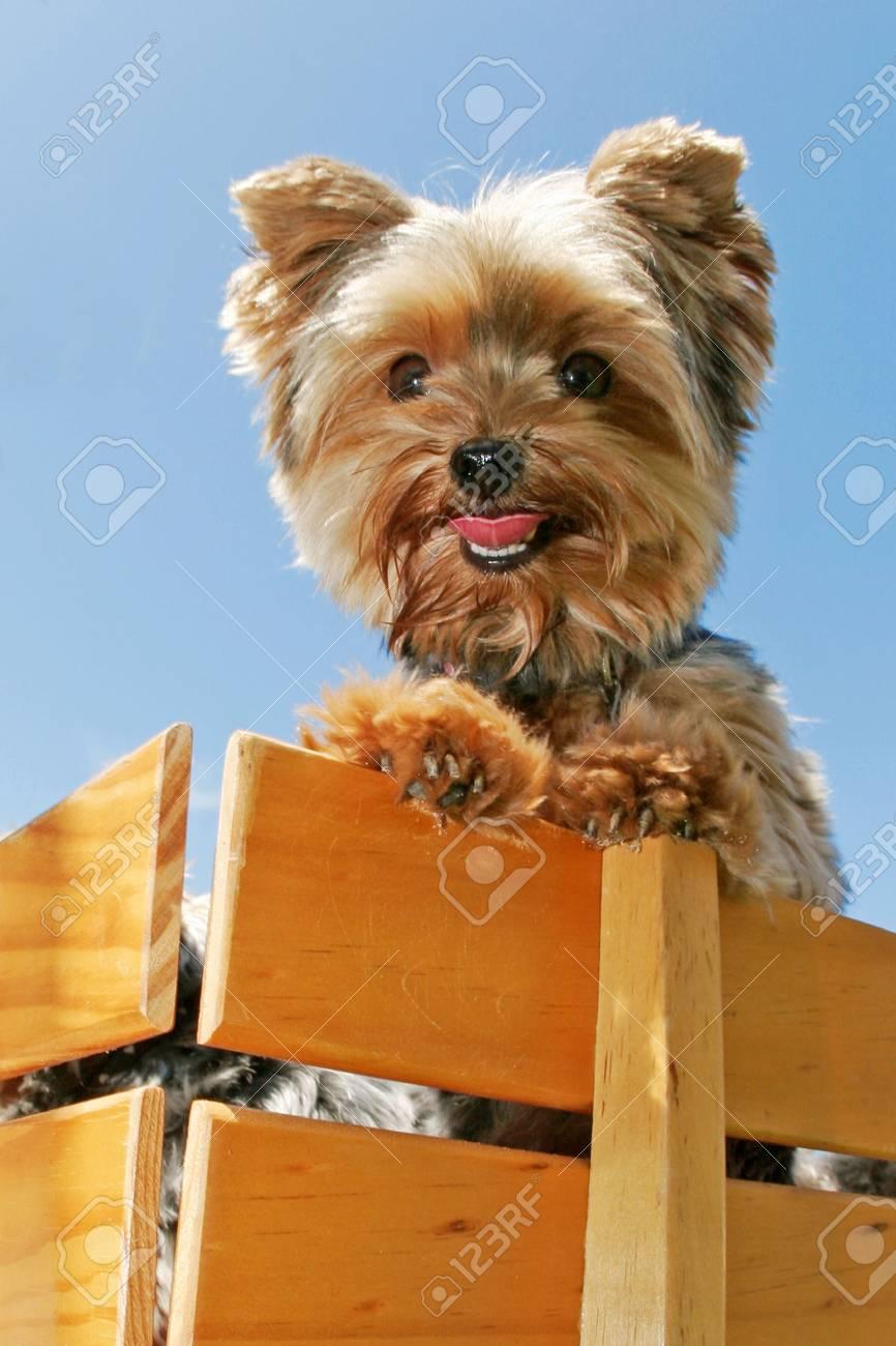 dog in wagon - 3342666