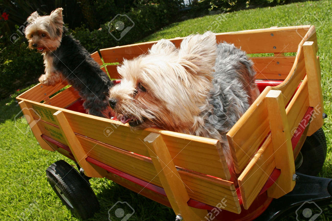 two dogs in wagon - 3342884