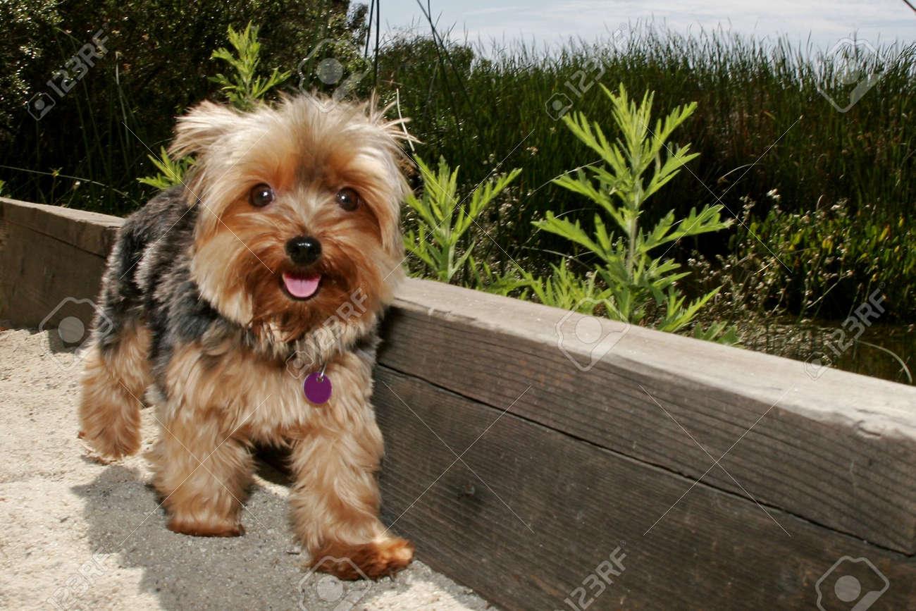 dog walking along edge of sand - 3348317
