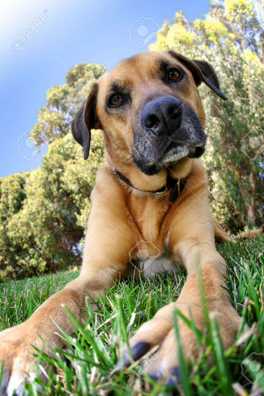 dog laying in grass - 3424866