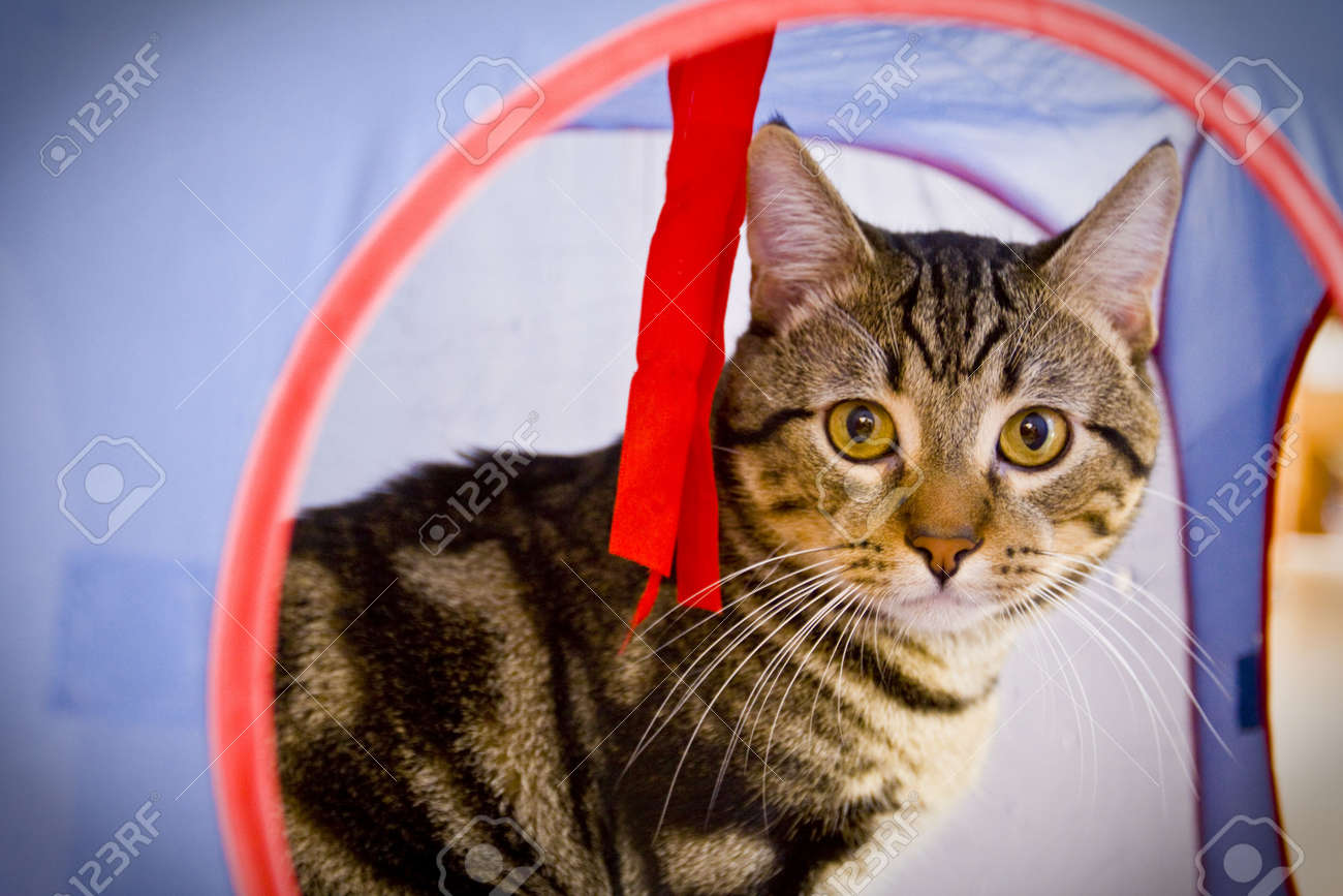 cat paying in cat house - 5085944