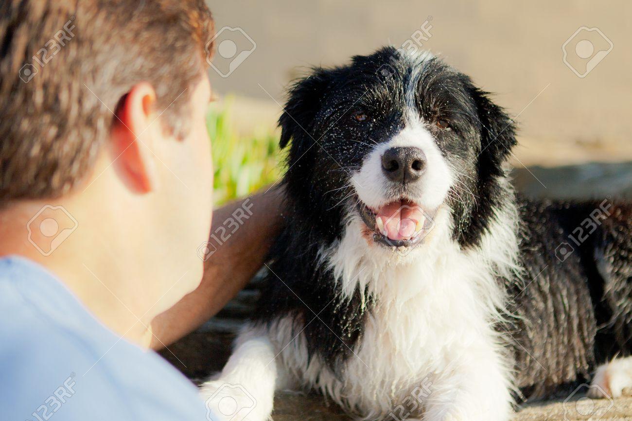 Border Collie smiling while being pet by man - 13153724