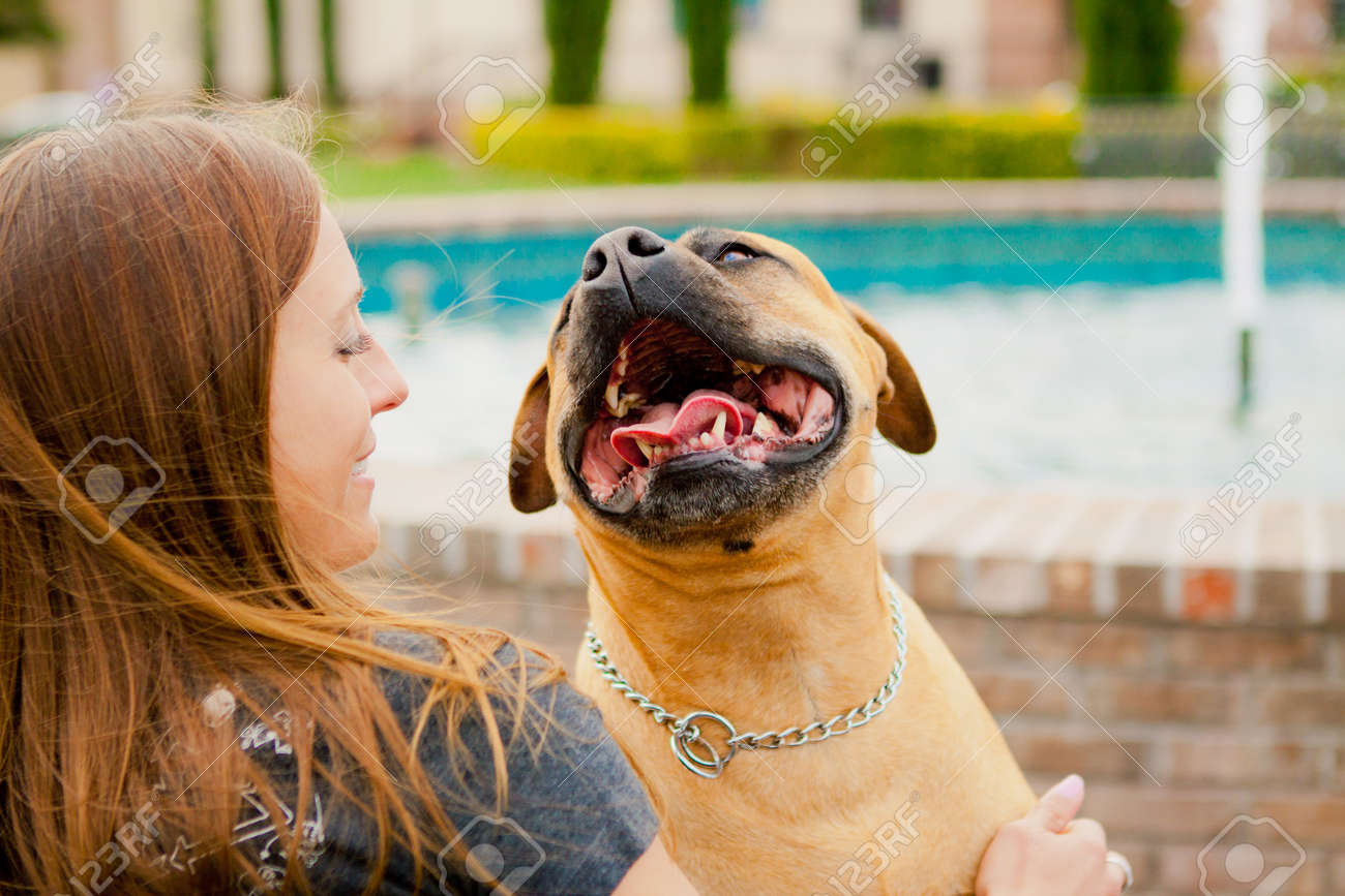 Tan American Staffordshire smiling at woman - 14383200