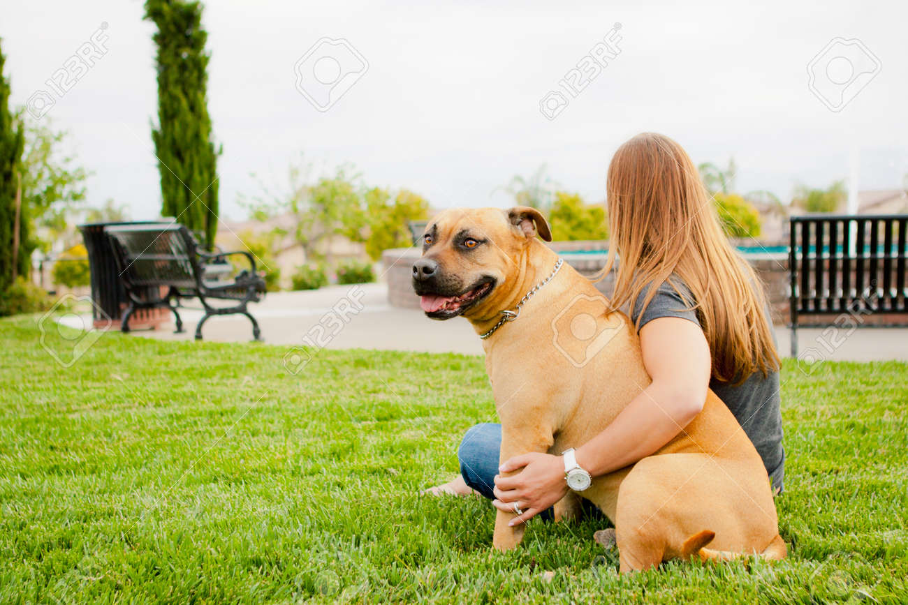 Tan American Staffordshire sitting at park with woman Stock Photo - 14383189