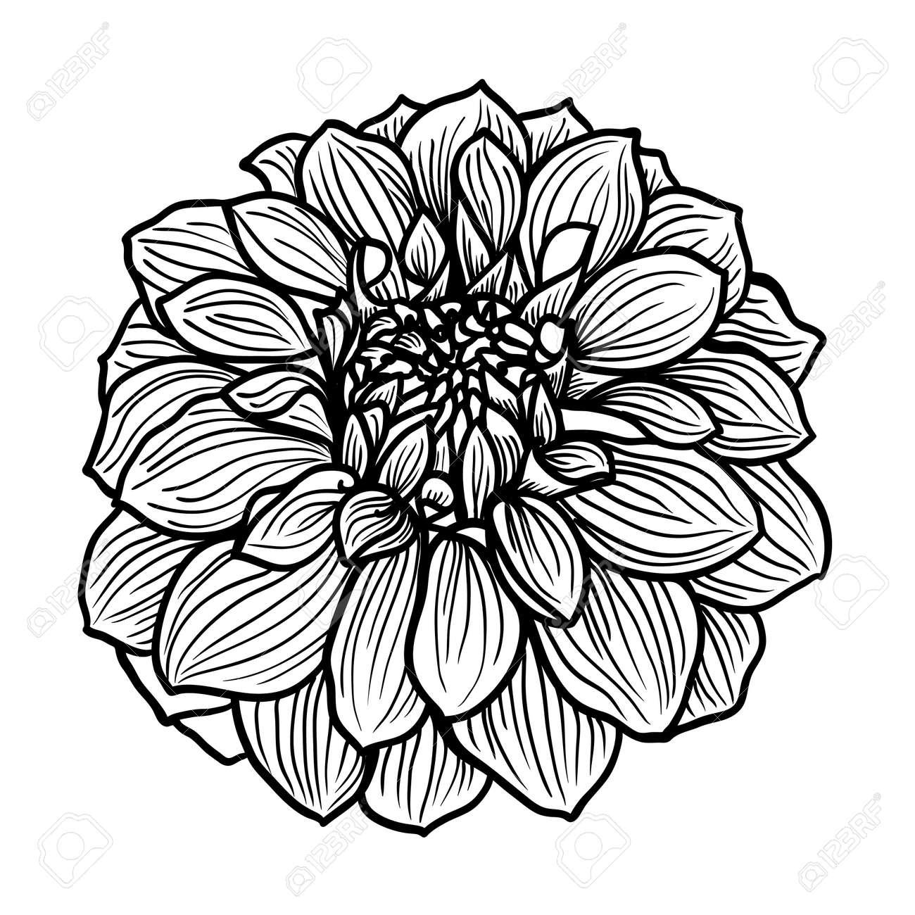 Hand Drawn Dahlia Flower Black And White Vector Illustration