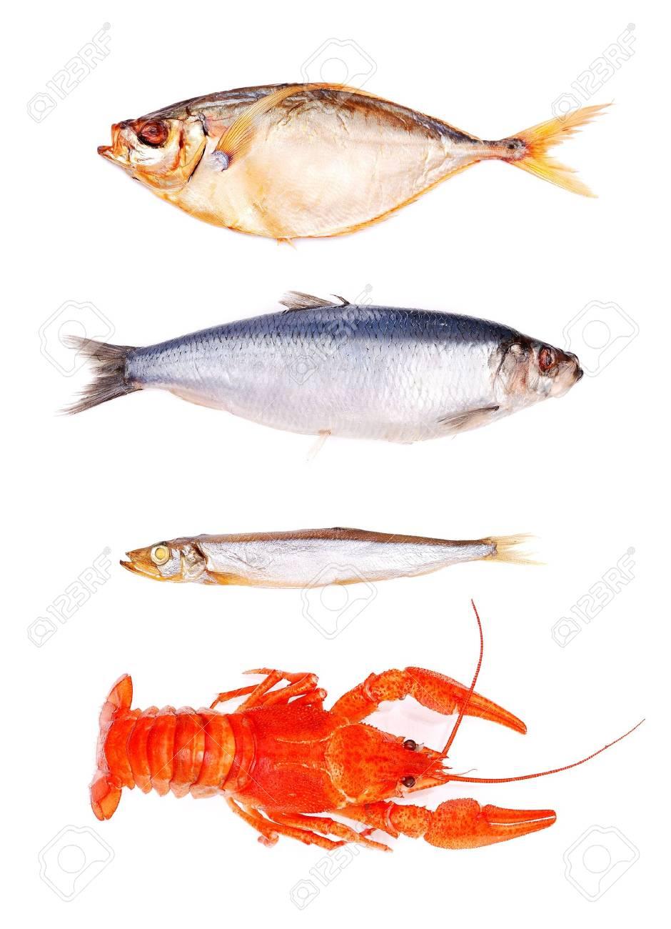set of fish isolated on white. Stock Photo - 6808438