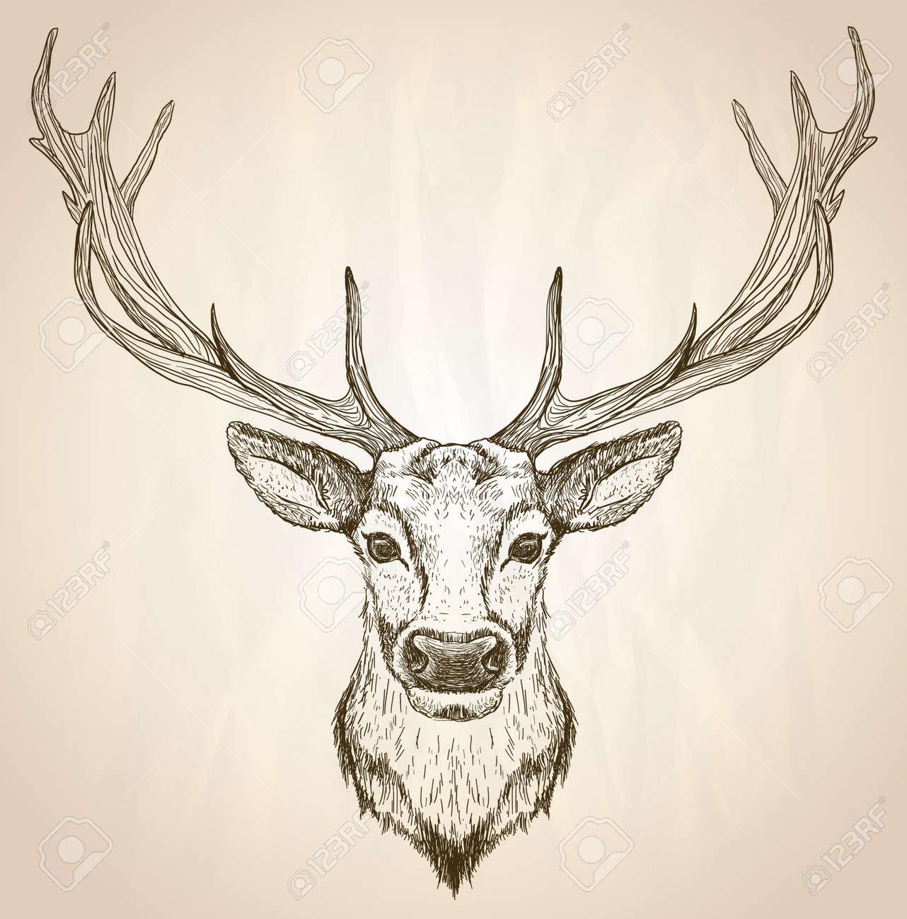 鹿の頭に大きな枝角、正面、ベクトル野生動物ポスターの手描き