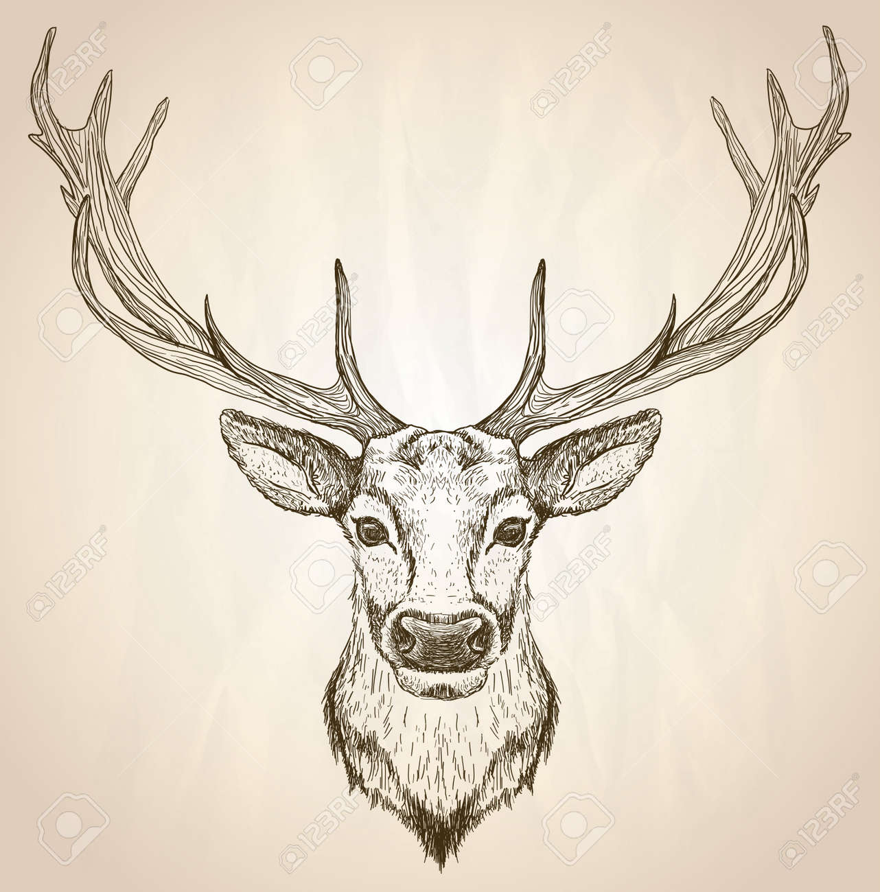 Hand drawn graphic sketch illustration of a deer head with big antlers front view