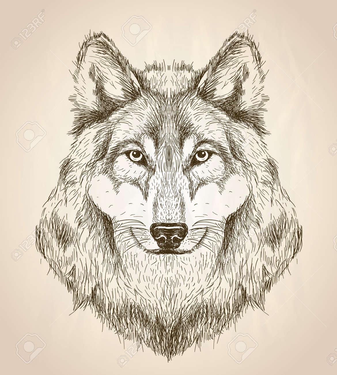 狼ヘッド正面黒と白のベクトル野生動物デザインのベクター スケッチ イラスト