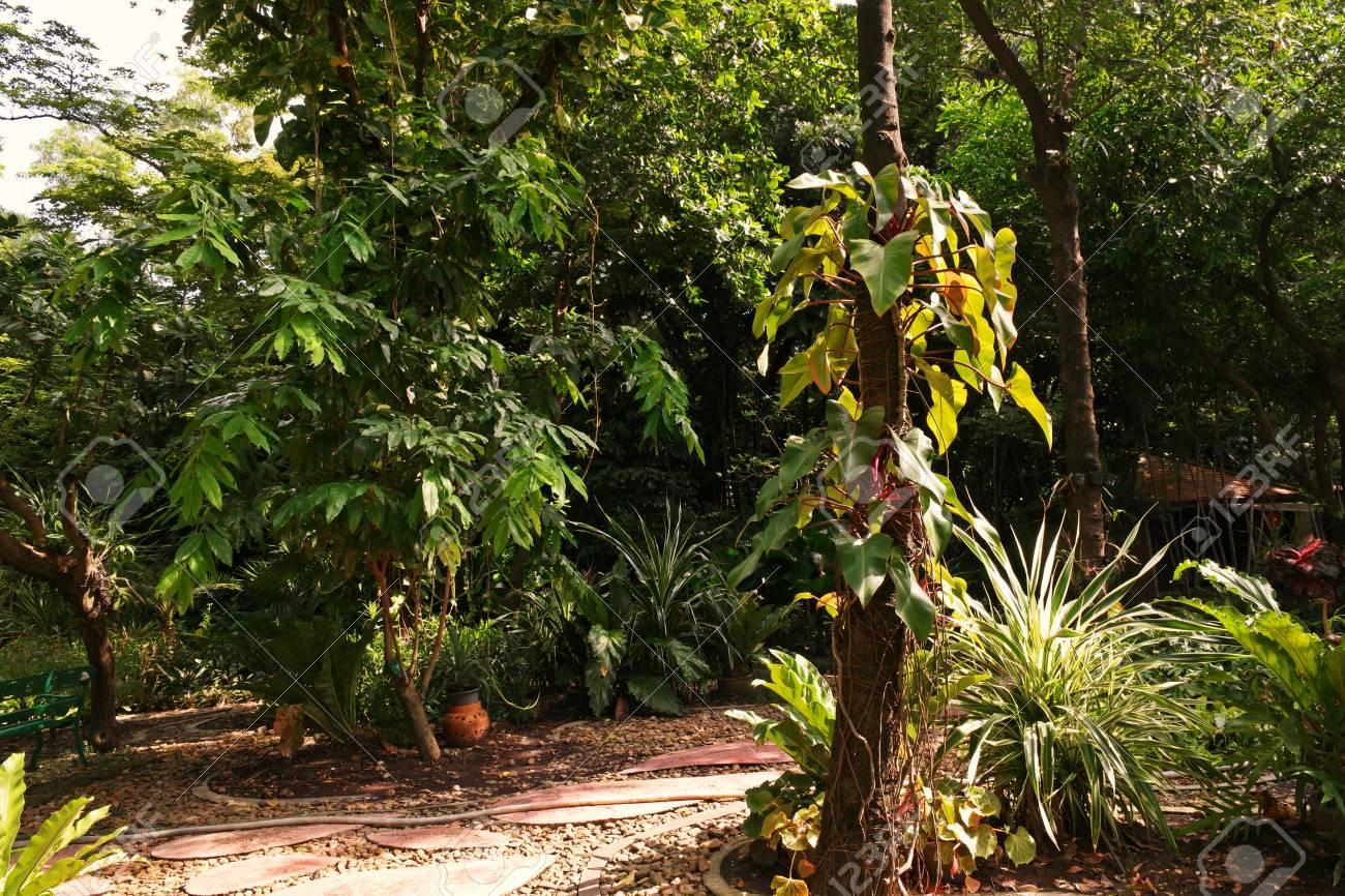 Tropical garden landscape evergreen forest stock photo picture and stock photo tropical garden landscape evergreen forest workwithnaturefo