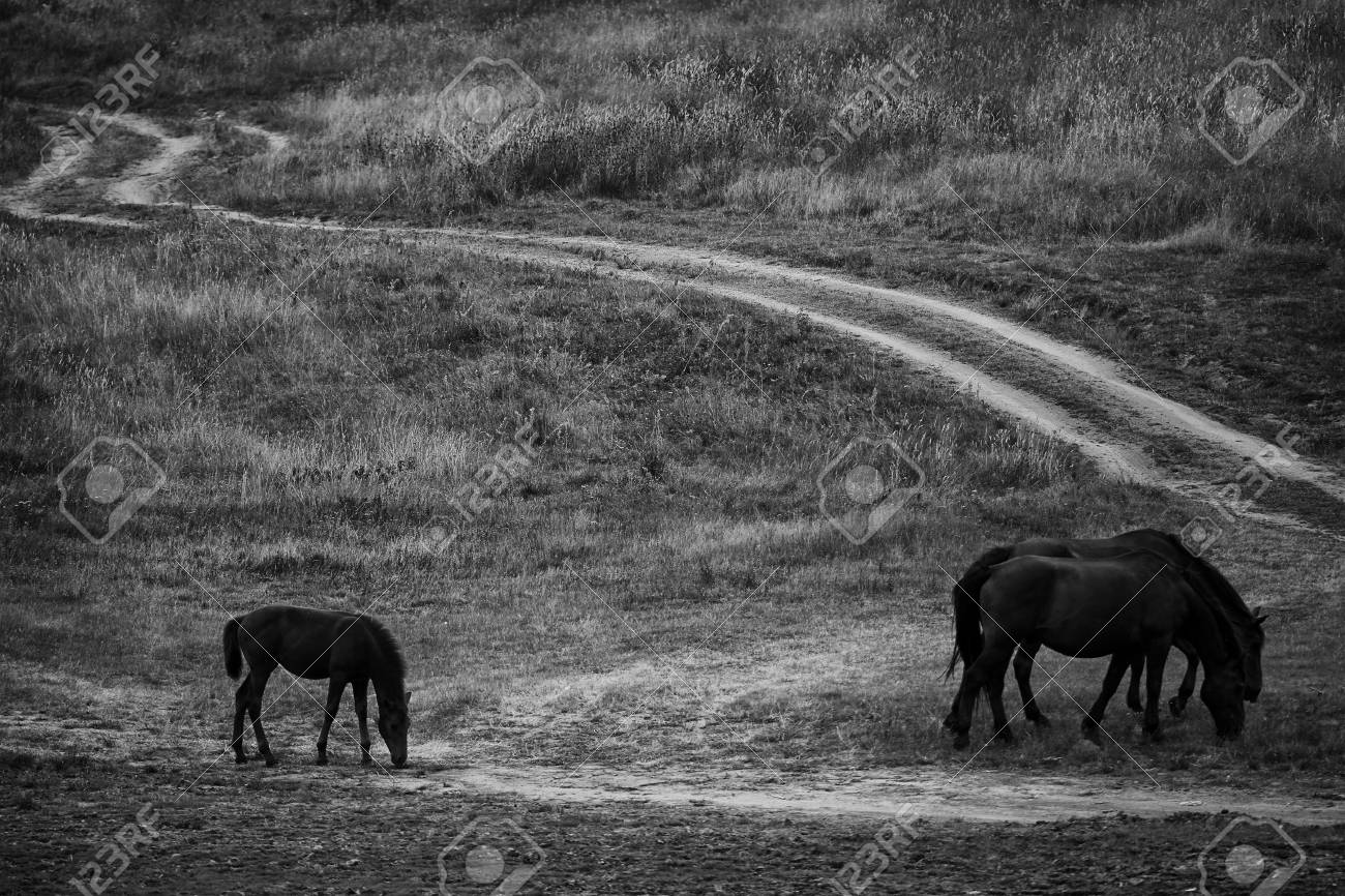 Wild Horses Near Dirt Road Black And White Landscape Photo Stock Photo Picture And Royalty Free Image Image 62889318