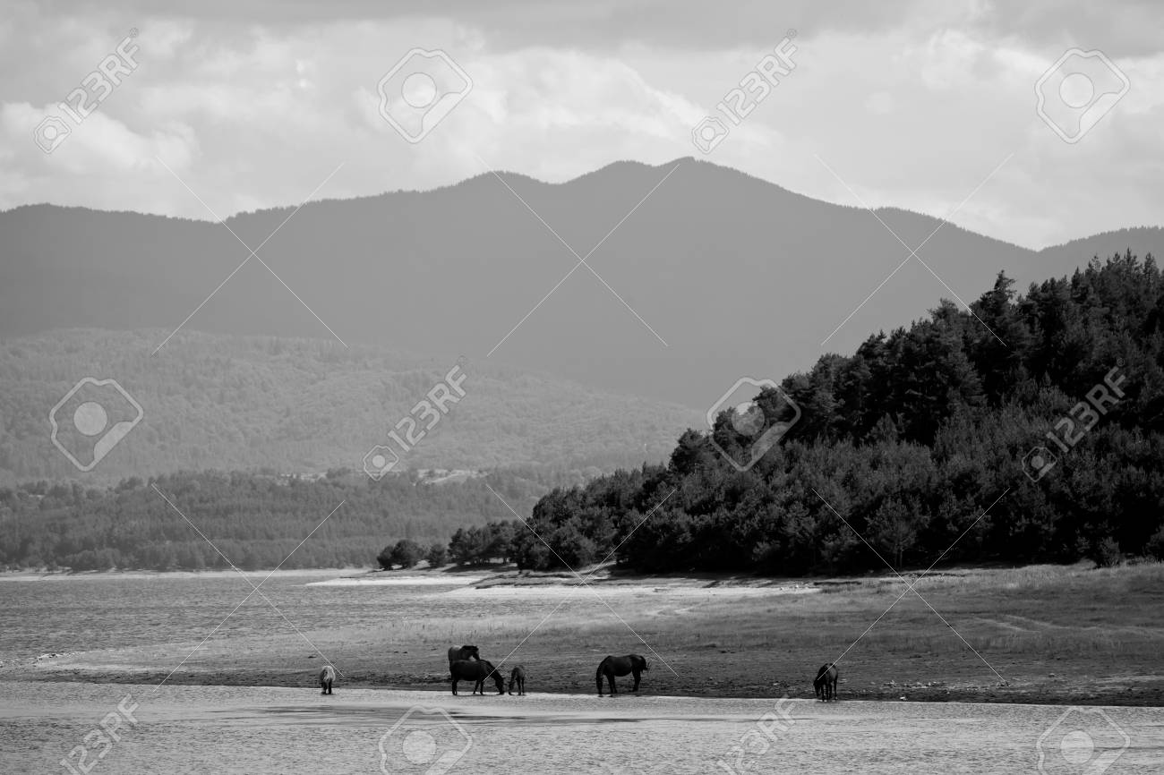Black And White Landscape With Herd Wild Horses Near High Mountain Stock Photo Picture And Royalty Free Image Image 62889391