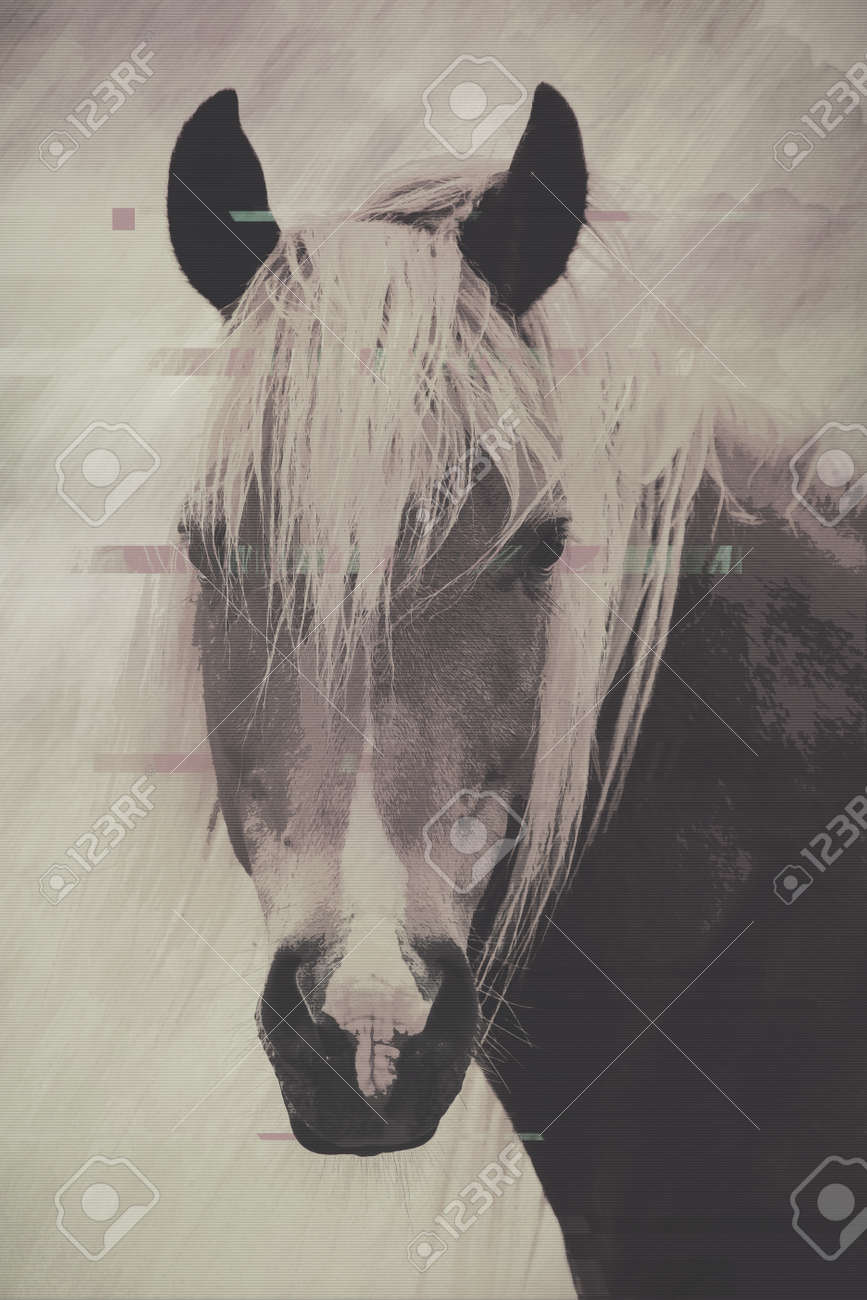 Abstract Glitch Art Paint Of Horse Black And White Grunge Animal Stock Photo Picture And Royalty Free Image Image 142950463