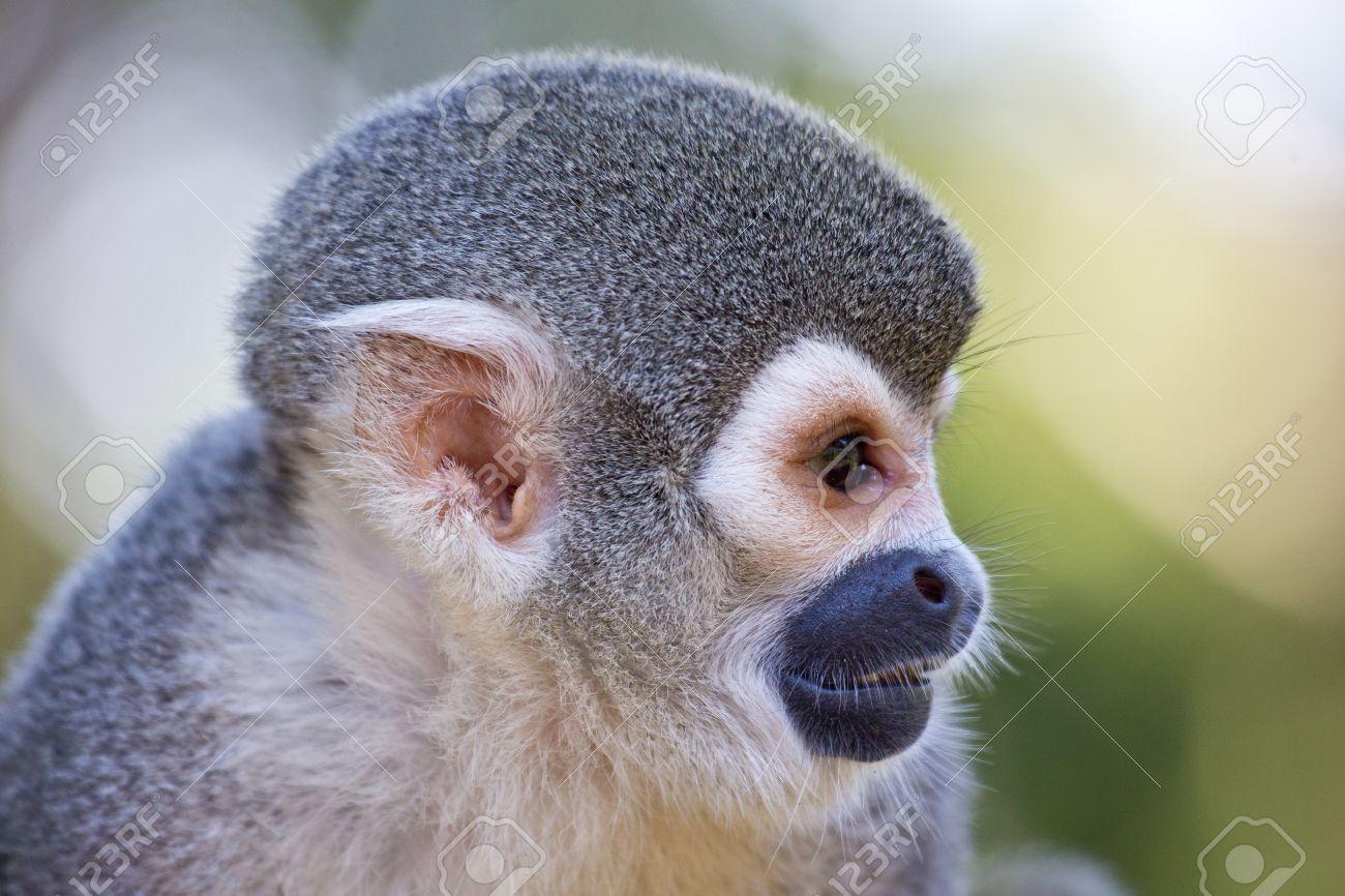 Monkey Head Profile